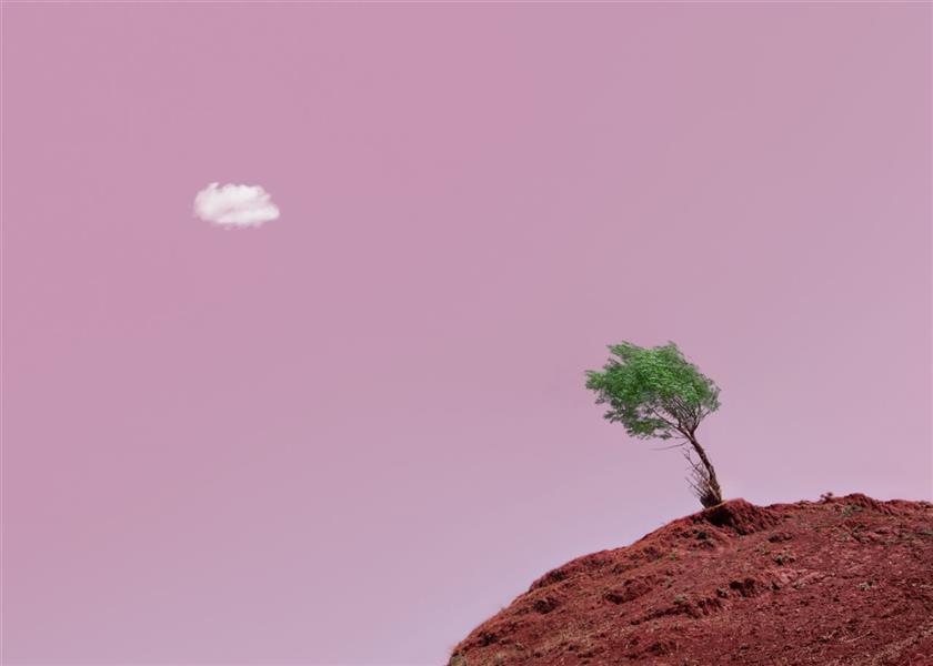 هنر عکاسی محفل عکاسی سیاوش اجلالی #مینیمال #درخت #تمنا #صورتی #ابر