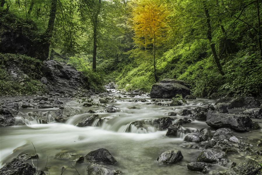 هنر عکاسی محفل عکاسی علیرضا جهانیان #جنگل