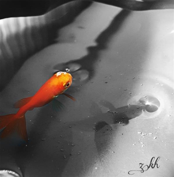 هنر عکاسی محفل عکاسی Zargol  #ماهی #ماهی_قرمز #حوض_آبی