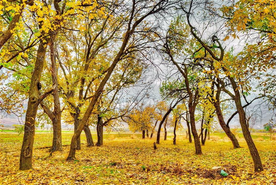 هنر عکاسی محفل عکاسی nader akbarpour(mezgana) به رنگ پاییز