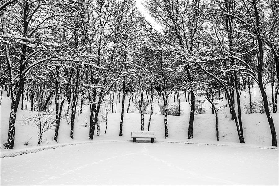 هنر عکاسی محفل عکاسی YOUSEF #زمستان#برف#شهر#پارک جنگلی