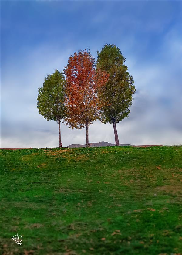 هنر عکاسی محفل عکاسی روح اله مصطفی نژادی #درخت ابعاد 50*70 کاغذ سیلک شاسی 16 میل