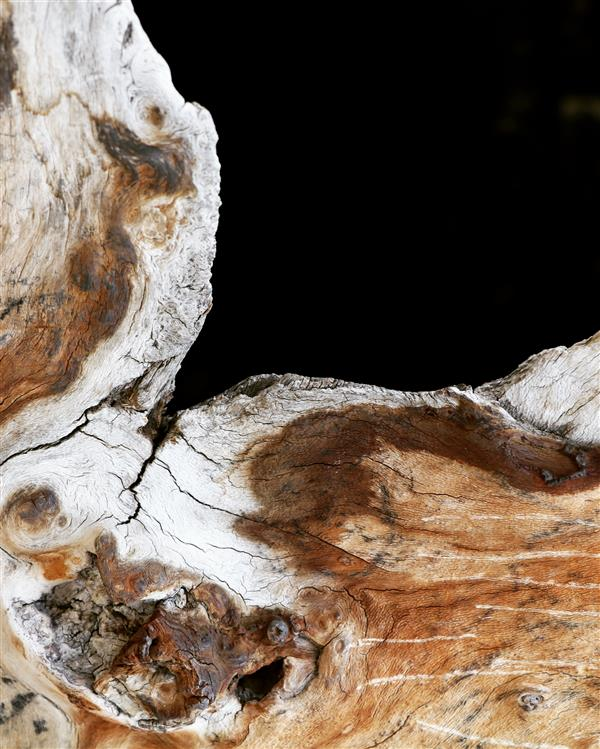 هنر عکاسی محفل عکاسی Saba obstruction# #potography #tree