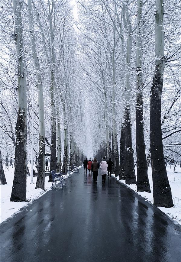 هنر عکاسی محفل عکاسی Theho3ein #life#winter#snow