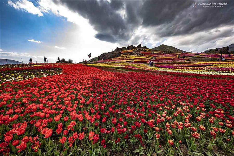 هنر عکاسی محفل عکاسی محمدرضا رضازاده دشت لالههای روستای کندر