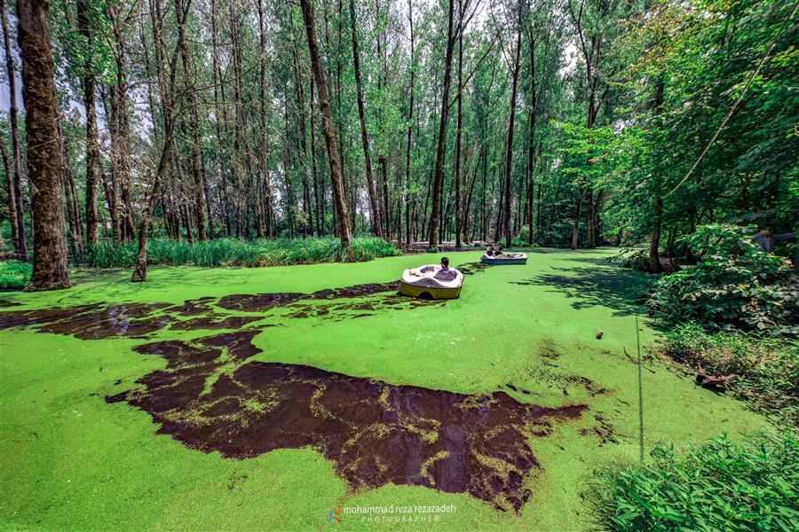 هنر عکاسی محفل عکاسی محمدرضا رضازاده پارک جنگلی سراوان رشت