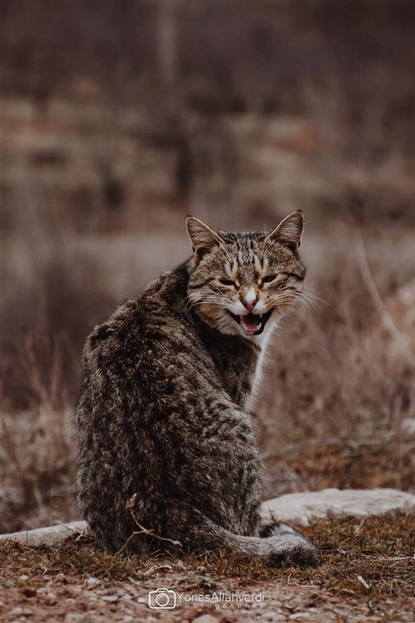 هنر عکاسی محفل عکاسی یونس اله وردی گربه گرسنه