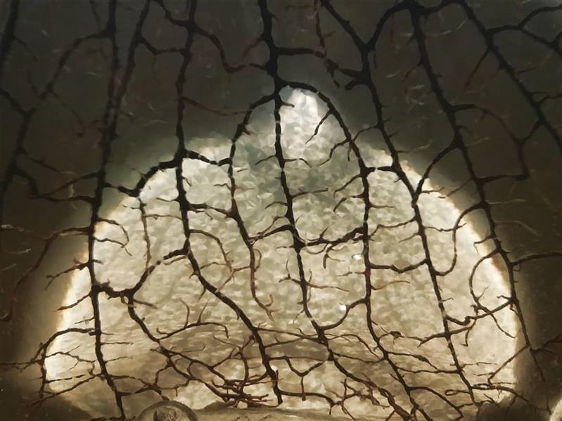 هنر عکاسی محفل عکاسی محسن غفرانی بهار۱۳۹۹ عکس مربوط به ریشه های یک گیاه می باشد که با بازتاب نور لامپ بر روی شیشه تُنگ حالت #دوگانگی به وجود آورده است. به بیان دیگر نور قاب دور لامپ باعث روشنایی  در میان عکس شده است.
