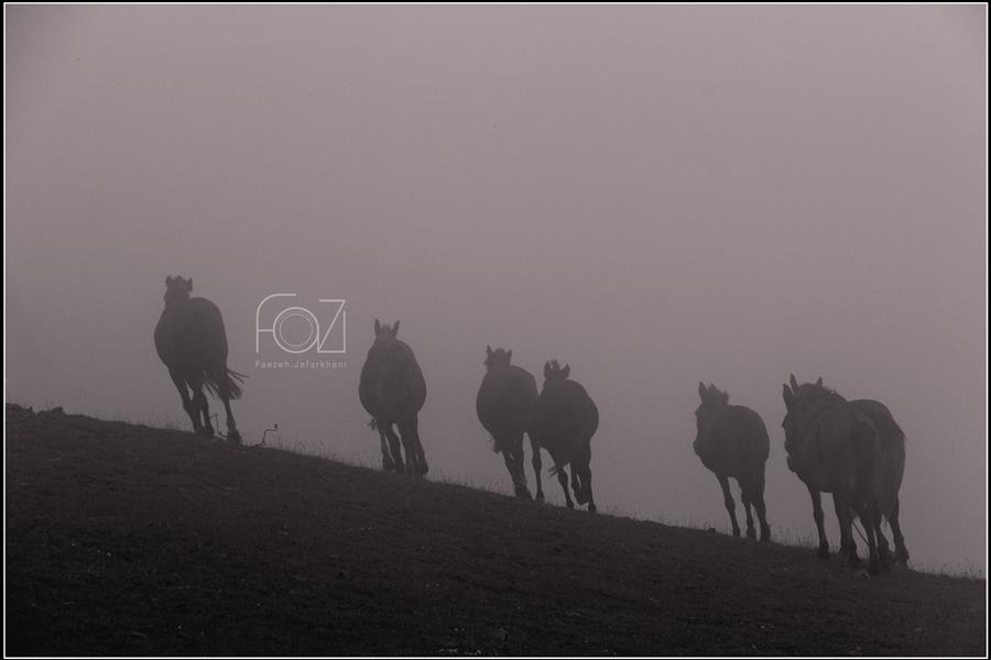 هنر عکاسی محفل عکاسی فائزه جعفرخانی ابعاد ۵۰×۷۰ #مه#طبیعت#اسب#تالش