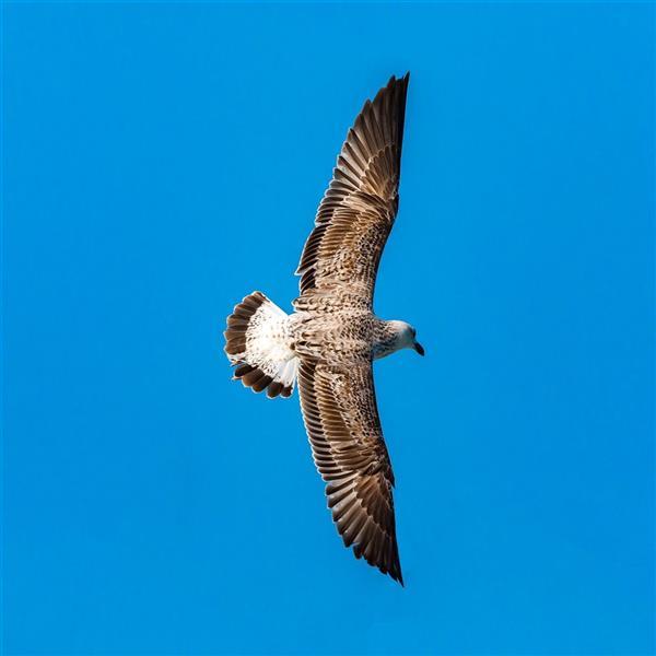 هنر عکاسی محفل عکاسی محسن فروغی فر چون تو بال بگشایی جهان در زیر پاهایت خواهد بود.  ۴۰×۶۰