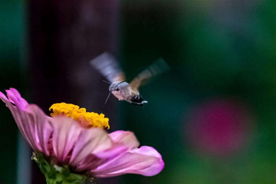 هنر عکاسی محفل عکاسی محسن فروغی فر Good time  50x70