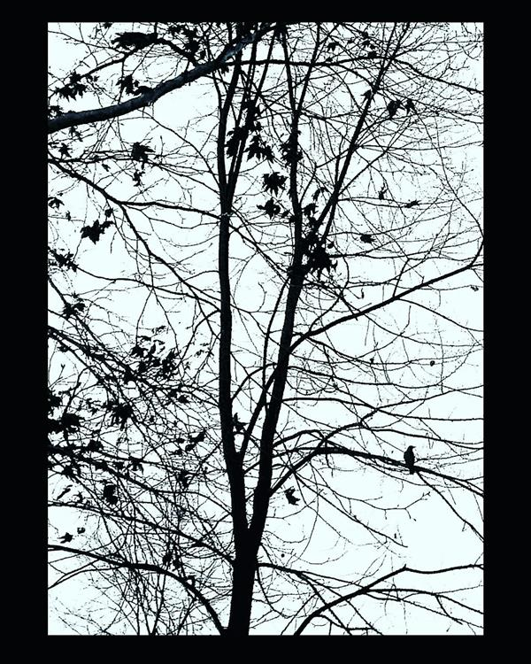 هنر عکاسی محفل عکاسی آسیه رضائی در بند کردن غصه... . . .دوست میدارم بوی خوش را و نه شکوفه را .نبض را و نه جسم را .وزش آرام باد را در میان شاخه ها،و نه شاخه های خشک را .دوست میدارم: .رؤیا را،رؤیا را،رؤیا .پس چگونه آن را کشته ام؟! ..................................................................... .شریان باید که همواره در نبض باشد .آونگ در میانه ی حضور و غیاب .بر باروی بلند شب و انتظار . .و رویا باید که همواره در دوردست باشد .همچون بارش برف بر فراز بلندی ها .تا واقعیت چرکین روزانه .آن را پای مال نکند... . .نه عشق میخواهم .نه رؤیا .نه جسم .نه سایه . آیا این زبان را در می یابی؟ .یا تو نیز همچون همه ی آنان .این زبان را میخوانی .بی آنکه مرا بخوانی؟... . .*غاده السّمان* _ _ _ _ _ _ _ _ _ _ _ _ _ _ _ _ _ _ _ _ _ _ _ _ _ _ _ _ _ #photo_by_me#photo_by_phone(#HUAWEI_Y550)#fine_art#art#artist #عکاسی_با_گوشی  اندازه:30*40