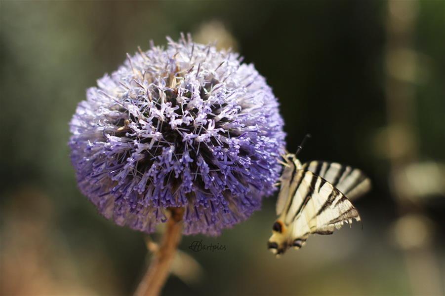 هنر عکاسی محفل عکاسی حسین خرمشاهی گل و پروانه