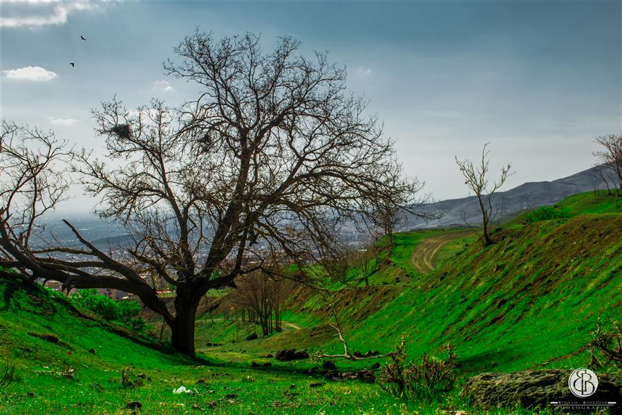 هنر عکاسی محفل عکاسی بهنام بهره دار #بهنام_بهره دار#طبیعت_کرج#روستای_محمودآباد