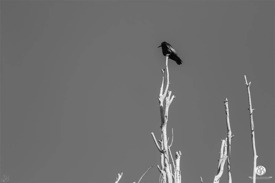هنر عکاسی محفل عکاسی بهنام بهره دار #بهنام_بهره دار#سیاه_سفید#مینیمال