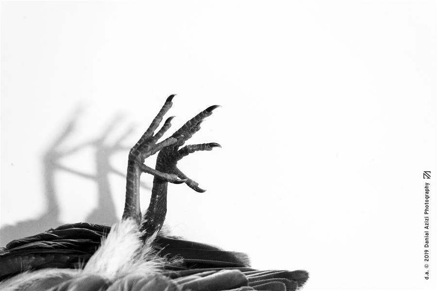 هنر عکاسی محفل عکاسی دانیال عزیزی #عکاسی #پرنده #مرگ #سورئال #مرده #پا