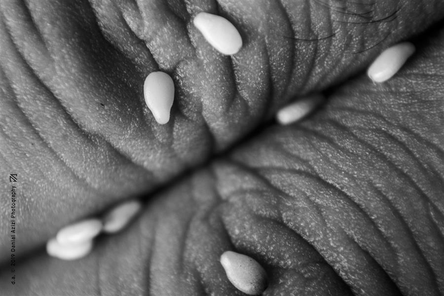 هنر عکاسی محفل عکاسی دانیال عزیزی #عکاسی #انگشت#پوست#سورئال #دست#کنجد#هنر #بافت