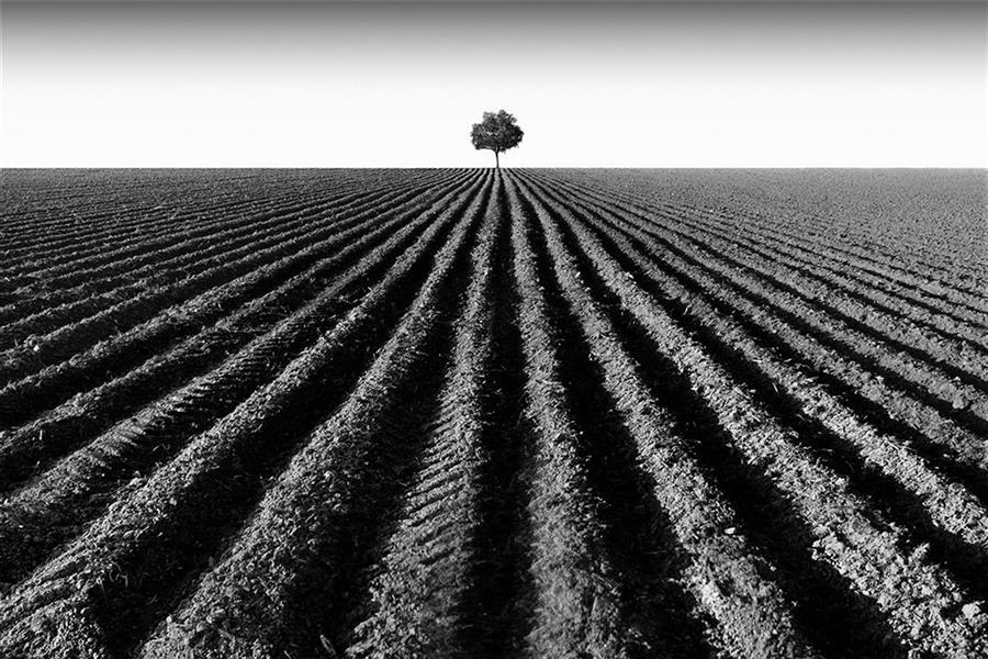 هنر عکاسی محفل عکاسی علی ذلقدری درخت تنها