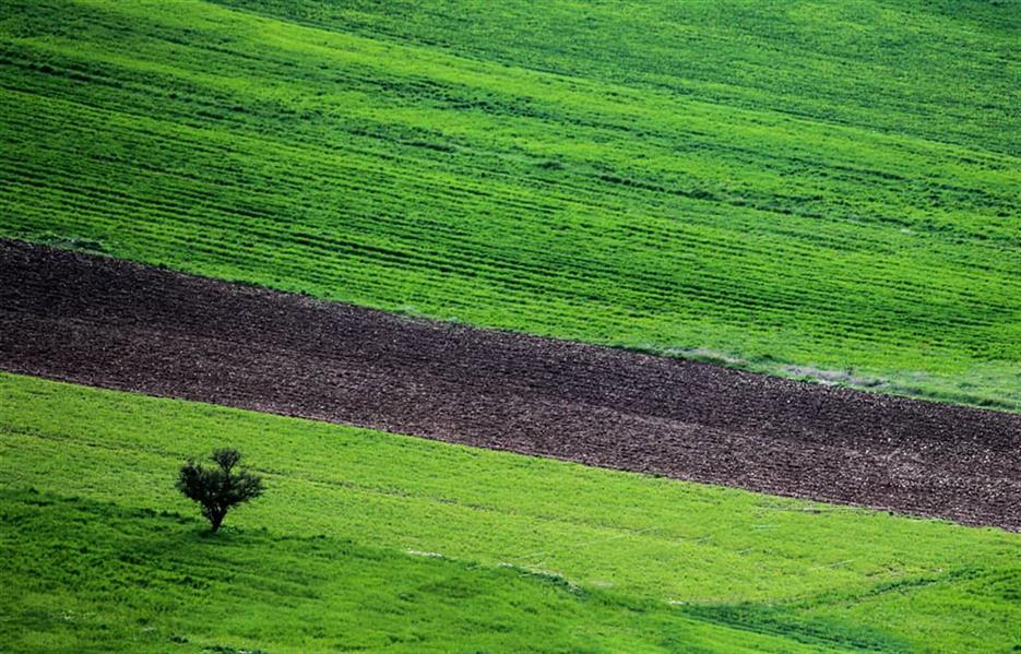 هنر عکاسی محفل عکاسی متین میرزاوندی مینیمال طبیعت بهار لرستان