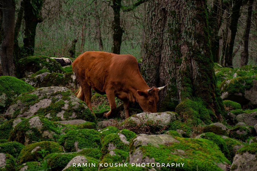 هنر عکاسی محفل عکاسی رامین کوشک سرایی طبیعت ایران  ابعاد : ۶۰۰۰×۴۰۰۰