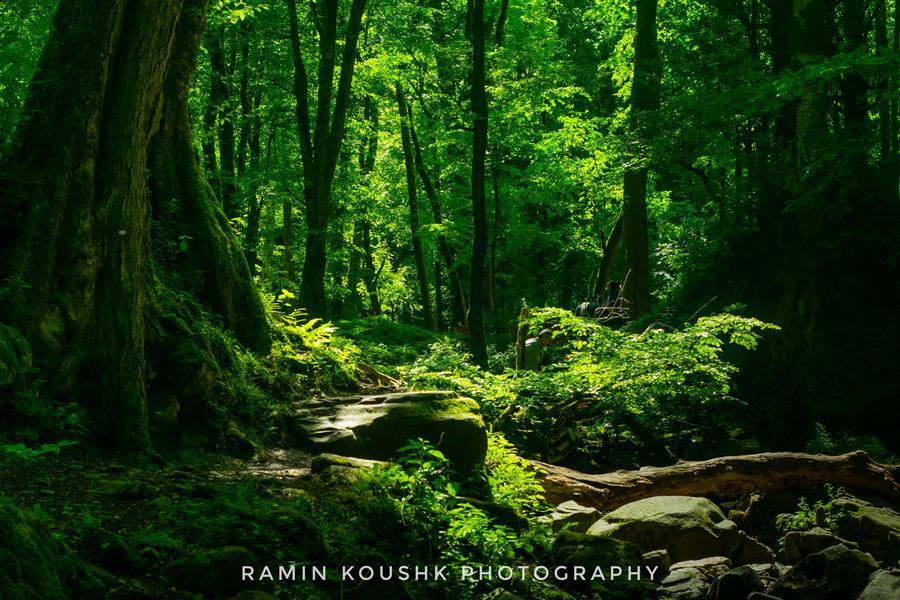 هنر عکاسی محفل عکاسی رامین کوشک سرایی منظره