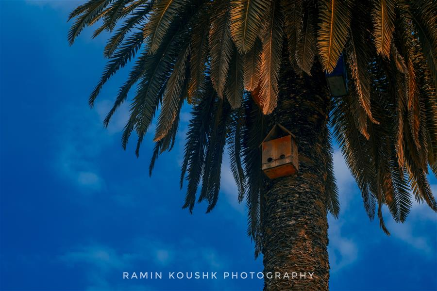 هنر عکاسی محفل عکاسی رامین کوشک سرایی نخل