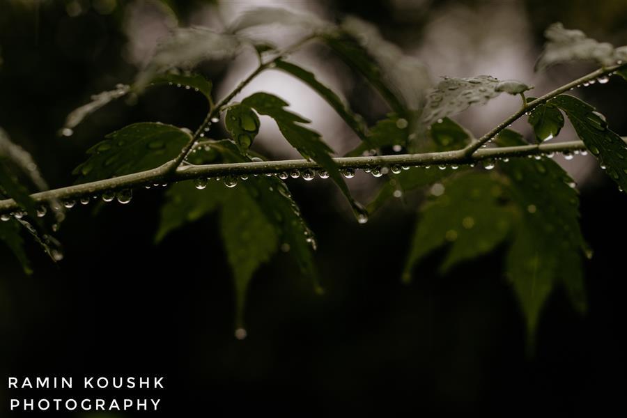 هنر عکاسی محفل عکاسی رامین کوشک سرایی باران