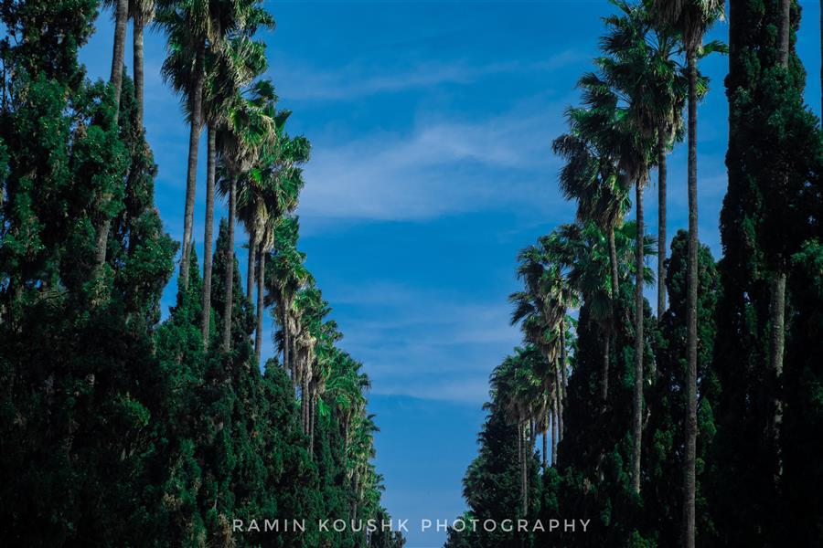 هنر عکاسی محفل عکاسی رامین کوشک سرایی طبیعت