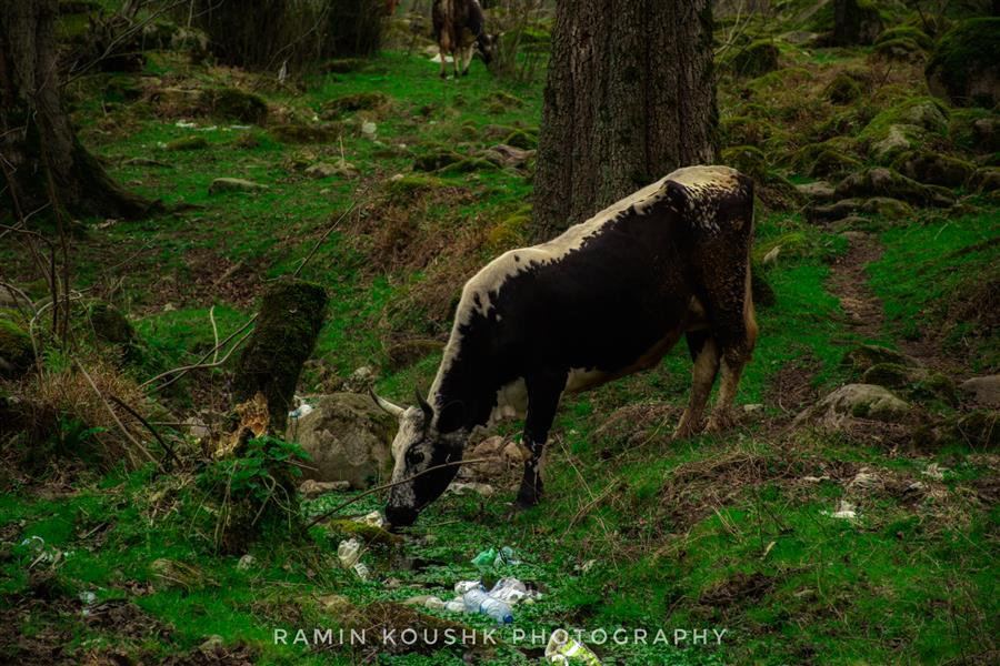 هنر عکاسی محفل عکاسی رامین کوشک سرایی در دامان طبیعت