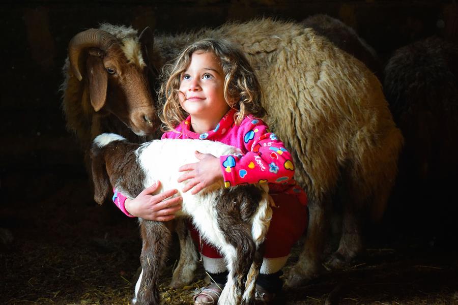 هنر عکاسی محفل عکاسی حامد سیامکی #کیمیا #روستا #کودک #گوسفند