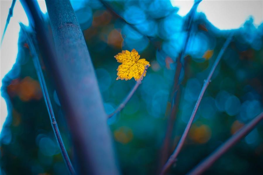 هنر عکاسی محفل عکاسی محمد پوریانی #photography#lanscape#bokeh##color