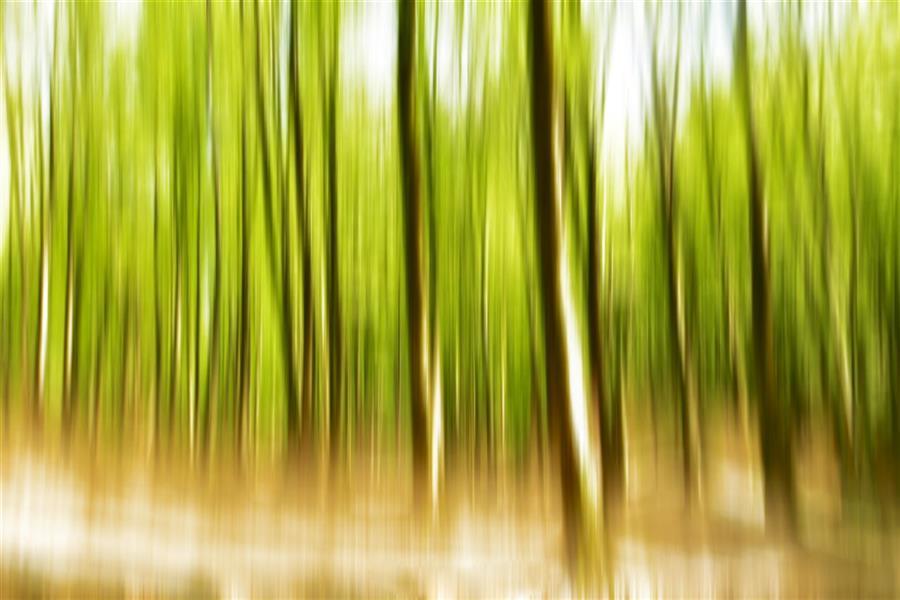 هنر عکاسی محفل عکاسی محمد پوریانی سبک : impression تکنیک : icm #photography#abstract#icm#impression