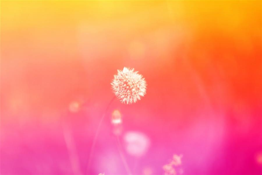 هنر عکاسی محفل عکاسی محمد پوریانی #photography#macro#color#flower#nature#