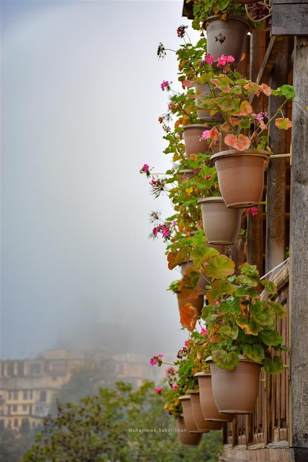 هنر عکاسی محفل عکاسی محمدرضا ثابتی خواه ماسوله  #شمعدانی های زیبای پاییزی #ماسوله