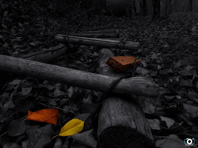 هنر عکاسی محفل عکاسی محمد طالقانی #black&white