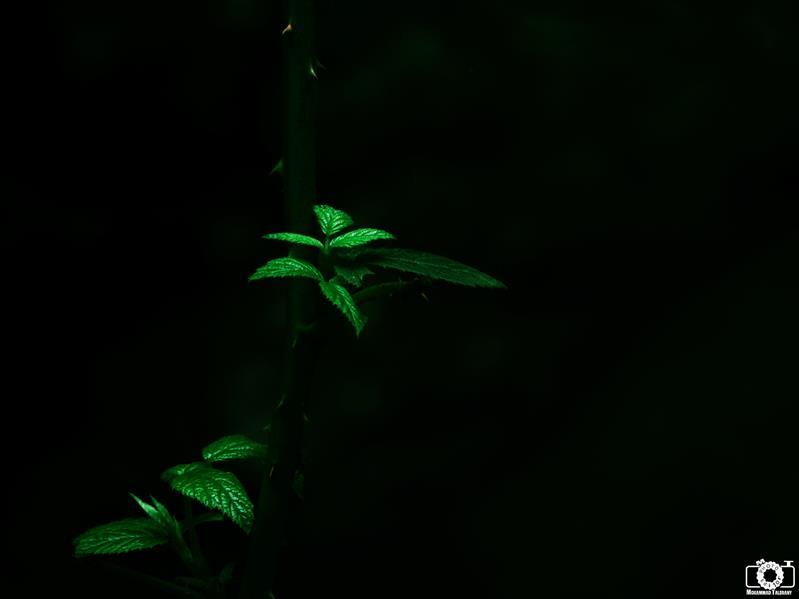 هنر عکاسی محفل عکاسی محمد طالقانی Green in Dark #محمد_طالقانی
