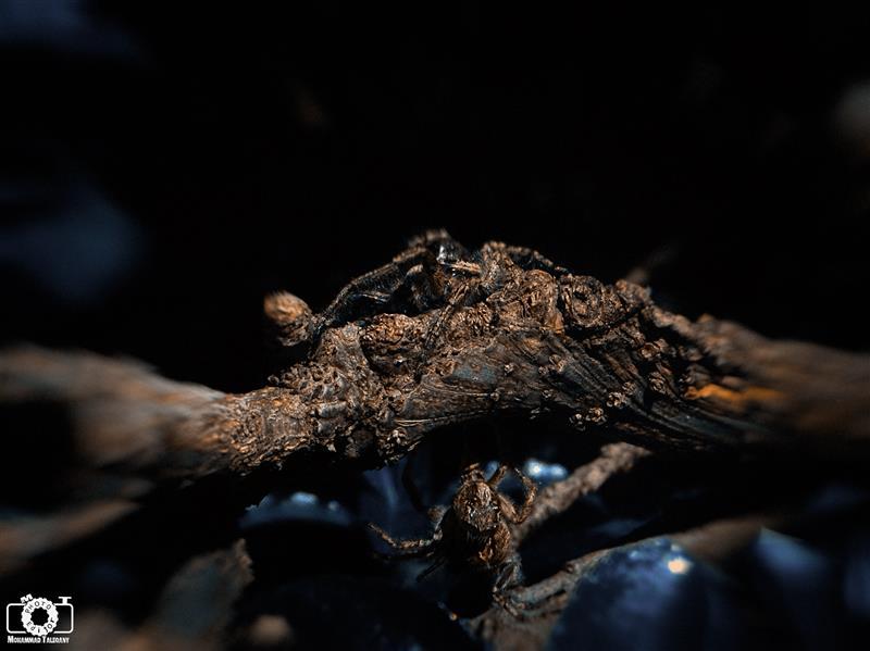 هنر عکاسی محفل عکاسی محمد طالقانی #محمد_طالقانی #Spider