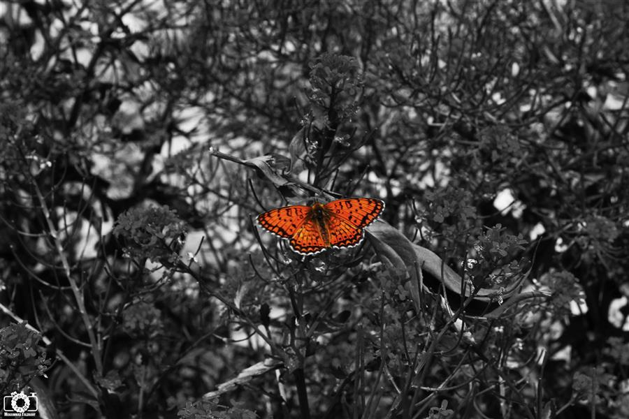 هنر عکاسی محفل عکاسی محمد طالقانی #محمد_طالقانی #Natural_Photography