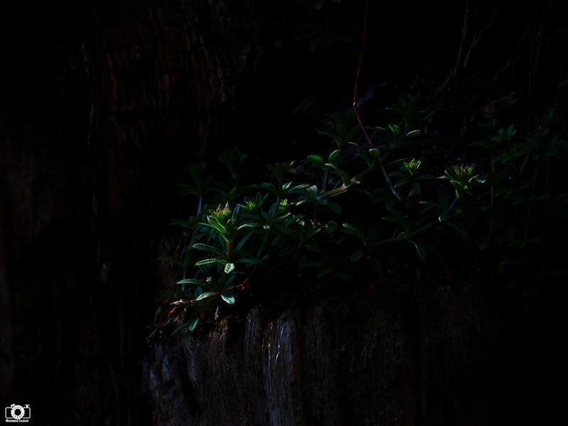 هنر عکاسی محفل عکاسی محمد طالقانی #Green_Dark #محمد_طالقانی