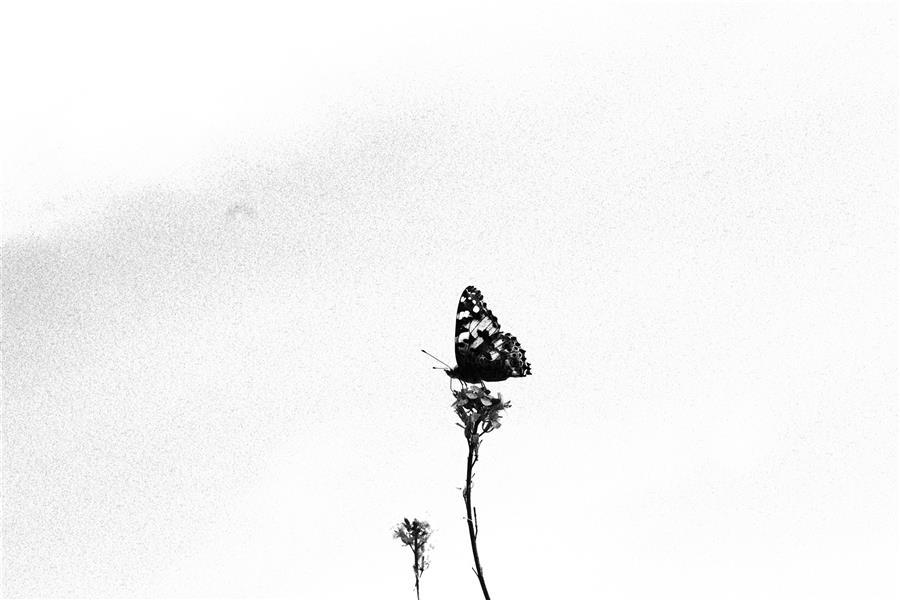 هنر عکاسی محفل عکاسی هانیه مرادی عکس #سیاه و سفید  برای #دکور خانه