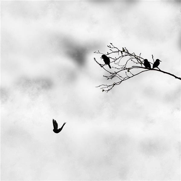 هنر عکاسی محفل عکاسی حسین علوی #مینیمال #پرنده #مفهومی #عشق #سقوط