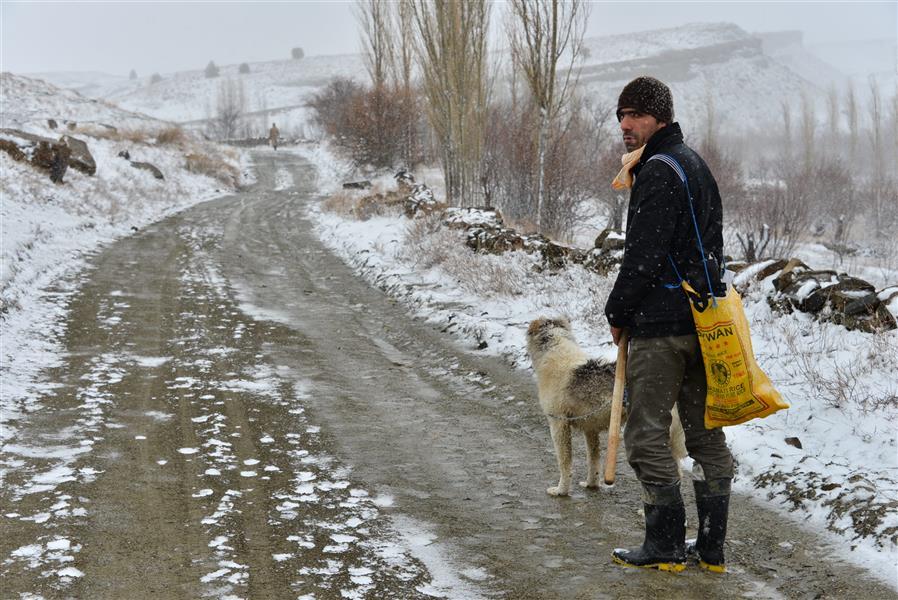 هنر عکاسی محفل عکاسی Mohammad amini زمستان
