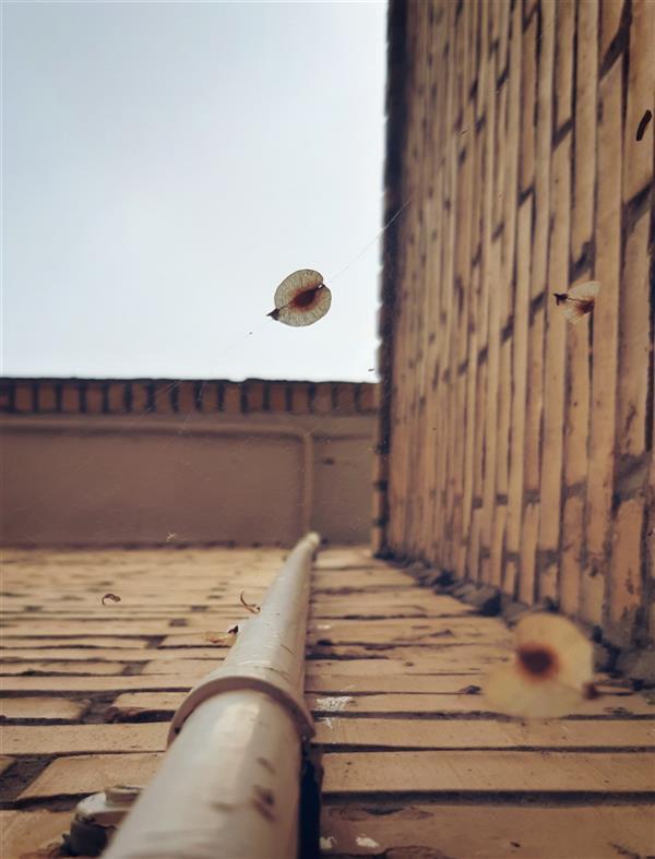 هنر عکاسی محفل عکاسی Sara mirvaziri #مینیمال#برگ#دیوار#غم#لوله#پرواز