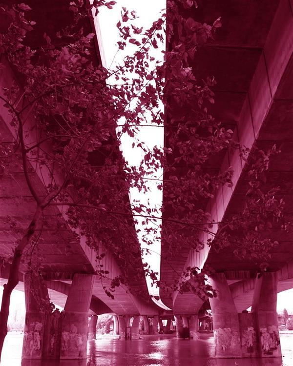 هنر عکاسی محفل عکاسی زهرا حسینی #عکاسی#۱۳۹۶#قرمز#زهرا حسینی