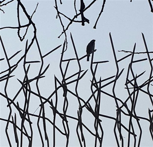 هنر عکاسی محفل عکاسی مهسا کرمانشاهی  نام اثر :آزادی در حصار  نام هنرمند :مهسا کرمانشاهی  #عکاسی