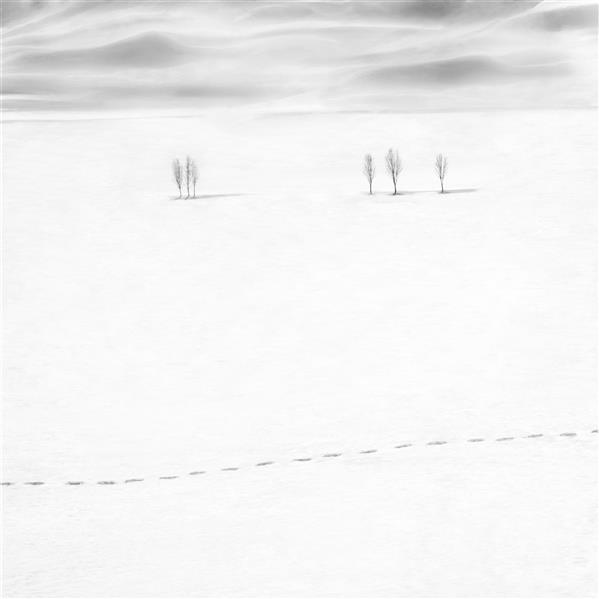 """هنر عکاسی محفل عکاسی مانی غلامشاهزاده این عکس در سال 1400 در شهر کوهرنگ گرفته شده  نام اثر """" ردپا و درختان """"   نام هنرمند : مانی غلامشاهزاده"""