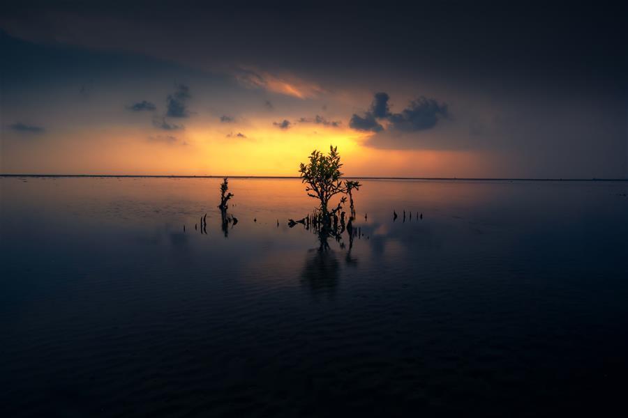 هنر عکاسی محفل عکاسی morteza ghanbari غروب بعد از طوفان در ساحل    #منظره#غروب#ساحل#بندرعباس#هرمزگان#رنگ#ردیا#خورشید#گیاه#landscape#color#sunset