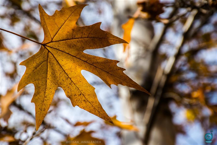 هنر عکاسی محفل عکاسی ehsanography #پاییز#ehsanography.ja #ehsan_jamalzadeh #autumn