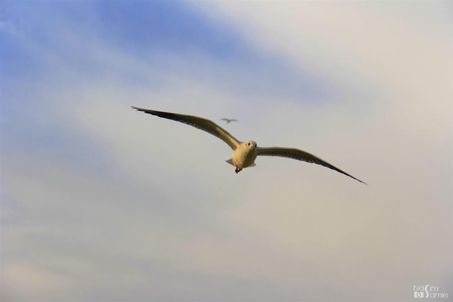 هنر عکاسی محفل عکاسی نسیم سمیع  باسلام؛ این اثر در اهواز گرفته شده است. پرواز پرندگان مهاجر بر روی رودخانهی کارون.  نام اثر: پرواز بر فراز موفقیت ...