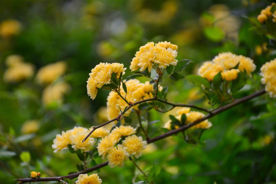 هنر عکاسی محفل عکاسی امیرسالار لاکچی گل های تازه #عکاسی #طبیعت #گل #عکس #خلاقیت #عکاسی_حرفه_ای #photography